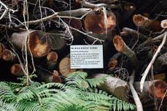 «Wieso vergammelt hier ein riesiger Haufen Holz?» – Der Revierförster liefert die Antwort per Schild.