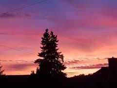 Eine Tanne im abendlichen Farbenspiel in Sitterdorf. (Bild: Reto Schlegel)