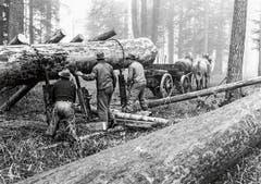 Waldarbeit um 1949/1950: Vor der Mechanisierung war die Holzernte beschwerlich und gefährlich. (Bild: Stadtbilbliothek Winterthur)
