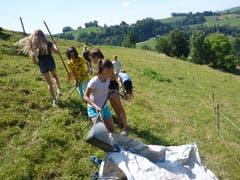 Die Mädchen des Reitferiencamps mit Maultieren müssen mitanpacken. (Lagerbild: Neeltje van den Ham Bölsterli, Willisau 25. Juli 2018)
