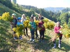 Die Weidepflege im Reitferiencamp mit Maultieren gibt zu tun. (Lagerbild: Neeltje van den Ham Bölsterli, Chanzelberg 28. Juli 2018)
