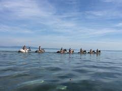 Pferde und Reiter geniessen ein Bad im Bodensee bei Frasnacht (Bild: Roman Weibel)