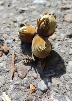Hulftegg: Drei Nüsse für Aschenbrödel (Bild: Stephan Lendi)