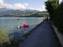 Langer Uferweg von Spiez bis Faulensee. (Bild: Josef Müller)