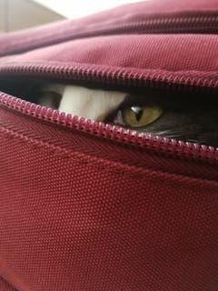 Der verstecke Kämpfer (Bild: Rommulus Koller)