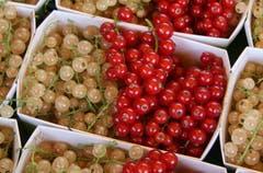 Rot-weisse Beerenkunst: Johannisbeeren am Bio-Stand der Familie Riemle aus Häggenschwil.
