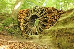 Holzskulptur von Urs-P. Twellmann (Kunst am Schlossberg). (Bild: Irene Wanner)
