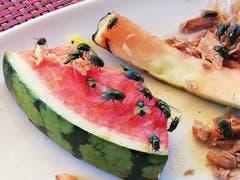 Auch Andere lieben Melonen (Bild: Roland Vogt)