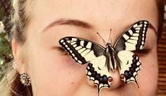 Noch ein bisschen die Flügel trocknen und sich aufwärmen dann geht's in die grosse Welt hinaus. Frisch geschlüpfter Schwalbenschwanz. (Bild: Gisela Helfenstein (Hellbühl, 14. August 2018))