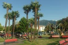 Palmen wie in tropischen Gebieten an der Seepromenade in Ascona. (Bild: Josef Müller (Ascona, 16. August 2018))