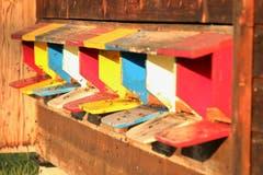 Emsiges Treiben beim Bienenhaus (Bild: Irene Wanner)