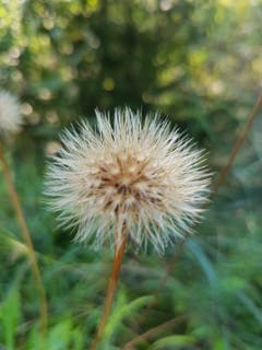 Es wird wieder Herbst! (Bild: Reto Schlegel)