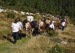 Säumer-Wanderwoche Sprinz-Route: Eintreffen auf dem Grimselpass. (Bild: Franz Krummenacher (Grimsel, 22. August 2018))