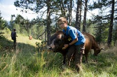 Ach der 12-jährige Sohn Flix packt mit an. Bild: Corinne Glanzmann (Flühli, 08. August 2018)