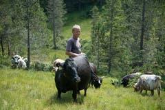 Fränz bei seinen Dexter-Rindern. Die kleine Rasse soll die Moorschutzflächen schonen. Bild: Corinne Glanzmann (Flühli, 08. August 2018)