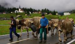 Rund 1000 Kühe machten sich am Samstag auf den Weg. (Bild: Franz Imholz, 25. August 2018)