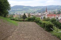 Erst kürzlich renaturiert: Vom obersten Teilstück des alten Eisenbahntrassees hat man einen schönen Ausblick auf die Kirche und das Quartier St.Otmar. (Bild: Reto Voneschen)