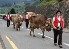 Blumengeschmückt und mit wohlklingenden Treicheln behangen erreichten die Kühe von der Alp Tesel am Samstag den Werkhof Hültsch in Gams, wo sie von ihren Besitzern in Empfang genommen wurden.