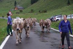 Den meisten Kühen wurde eine Fahrtreichel oder Glocke umgehängt. (Bild: Franz Imholz, 25. August 2018)
