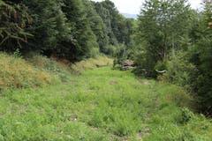 Auf Höhe des Familiengartens Ruckhalde ist die alte Trassee bereits grün. Die Stadt will auf der Route einen einfachen Fuss- und Veloweg anlegen. Der politische Entscheidungsprozess dafür soll bis Frühling 2019 in Gang gesetzt werden. (Bild: Reto Voneschen)