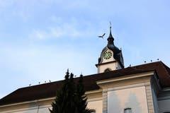 Zwischenhalt der Störche in Triengen (Bild: Hedy Gasser-Küng)
