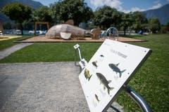 Die nationale Fischbrutanlage befindet sich in Weesen, weshalb am dortigen Spielplatz eine Tafel über die verschiedenen Fischarten informiert.(Bild: Mareycke Frehner)
