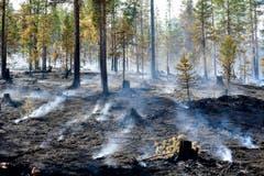 Zu heiss, zu trocken: Waldbrände in Schweden. (Bild: Keystone)