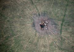 Viele Bauern haben Mühe, ihre Rinder satt zu bekommen - auch diese Rinderherde in Deutschland weidet auf einer dürren Wiese. (Bild: Keystone)