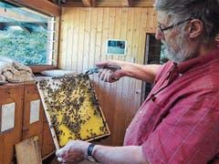 Werner Walker kontrolliert eine Bienenwabe.