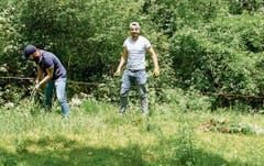 Asylbewerber helfen einem Landwirt in Frümsen, die vielen Berufkraut-Pflanzen zu entsorgen.
