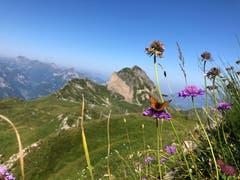 Diese Sommerblumen mit Schmetterling und dem Diepen im Hintergrund hat die Fotografin am 3. August auf dem Siwfass Richtung Schön Chulm festgehalten. (Bild: Lynn Aeschlimann)