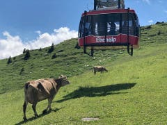 Begegnung unterhalb der Bergstation Ebenalp. (Bild: Mark Eisenhut)