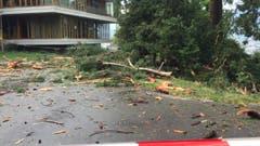 Die Baumteile wurden in einem Umkreis von 100 Metern zerstreut. (Bild: Roman Hodel)