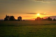 Schöne Morgenstimmung im Rheindelta. (Bild: Toni Sieber)