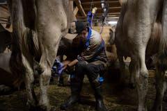 Sämi Schaufelberger melkt eine Kuh. (Bild: KEYSTONE/Gian Ehrenzeller (12.09.2018))