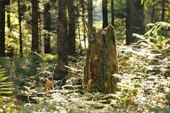 Gesehen im Schötzer Wald. (Bild: Irene Wanner (Schötz, 11. September 2018))