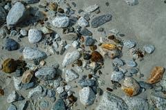 Schöne Steine, eingebettet im «Sandstrand» beim Grimselsee. (Bild: Grimsel, Marianne Schmid (9. September 2018))