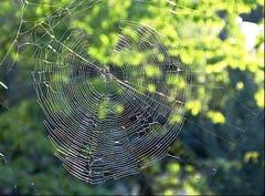 Der Netzbau der Spinnen ist eine kunstvolle Konstruktion in der Natur. (Bild: Josef Lustenberger (Wolhusen, 11. September 2018))