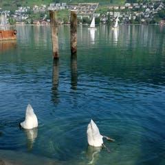 Synchronschwimmen an der Buochser Seemeile – und das gleich doppelt. (Bild: Sepp Bernasconi (Buochs, 13. September 2018))