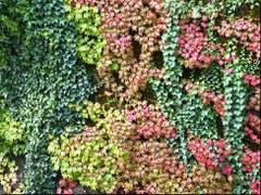 Herbstfarben! Trari trara, der Herbst, der ist da! Bezaubernd! (Bild: Josef Lustenberger (Wolhusen, 14. September 2018))