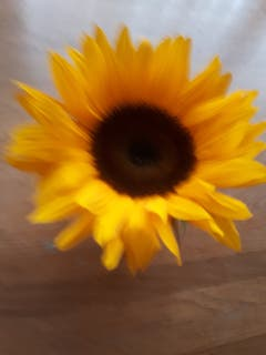 Sonnenblume als Tischdekoration. (Bild: Heinrich Inderbitzin (Emmen, 14. September 2018))