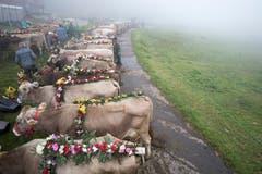Bauern und ihre Kuehe waehrend den Vorbereitungen fuer den Aplabzug von der Alp Hinterfeld im Meiental am Sustenpass ins Dorf Wassen im Kanton Uri, am Samstag, 15. September 2018. (KEYSTONE/Urs Flueeler)