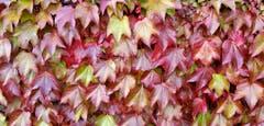 Der Herbst ist angekommen in Leutmerken TG (Bild: Stepahn Lendi)