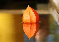 Die Gesichter des Herbstes erscheinen. (Bild: Rolf Schweizer)