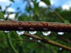 Endlich Regen! (Bild: Toni Sieber)