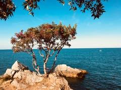Am Fusse des Olymp. (Bild: Helene Gosswiler (Stomio, Griechenland (21. September 2018))