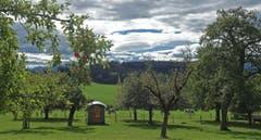 In Erwartung der Herbststürme. Herbstwetter auf dem Tannenberg. (Bild: Walter Schmidt)