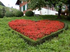 Blumen sagen oft mehr als Worte; «Ech schänkä dier mis Härz, meh hani ned!» Aufgenommen zwischen Kehrsiten und Stansstad. (Bild: Margrith Imhof-Röthlin (23. September 2018))