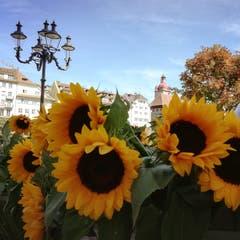 Flower Power in Luzern. (Bild: Larisa George, 23. September 2018)