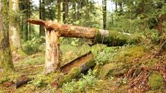 Unterwegs im Wald. (Bild: Irene Wanner (Schötz, 24. September 2018))